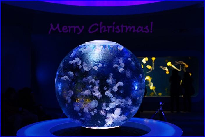 メリークリスマス in 新江ノ島水族館 2013_b0145398_21255640.jpg