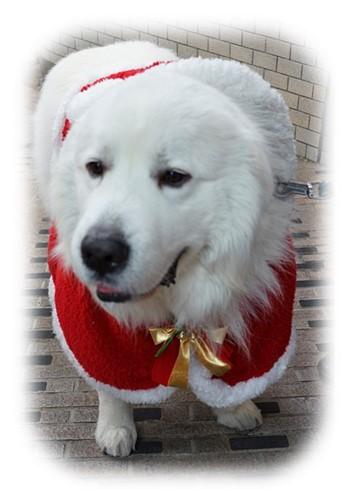メリークリスマス in 新江ノ島水族館 2013_b0145398_21361278.jpg