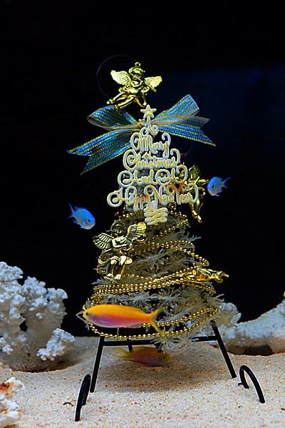 メリークリスマス in 新江ノ島水族館 2013_b0145398_21451438.jpg
