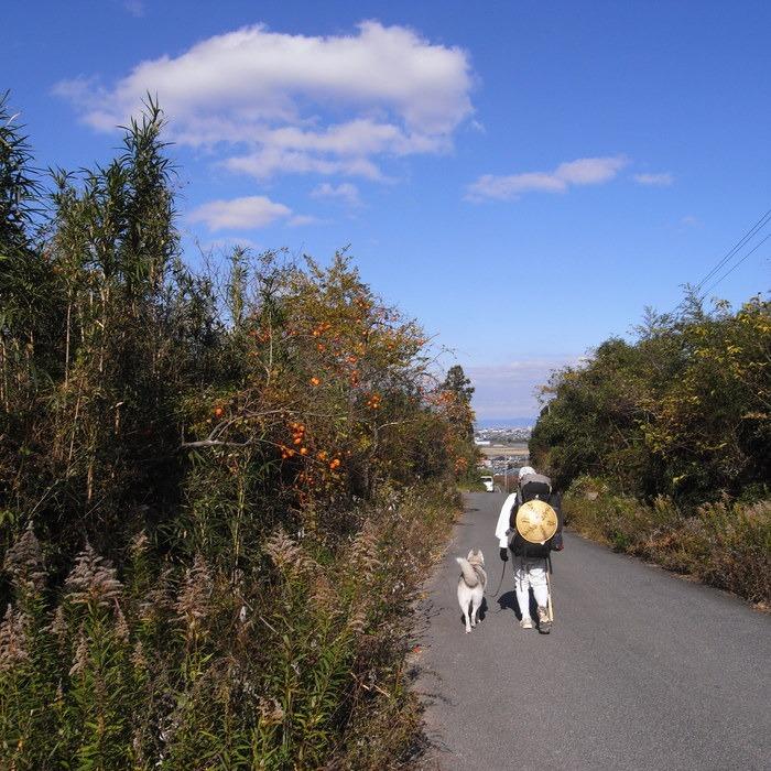 Memory of the second pilgrimage with husky HANA II_c0049299_18222058.jpg