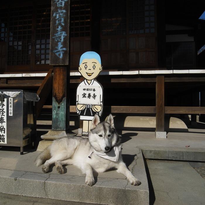 Memory of the second pilgrimage with husky HANA II_c0049299_18422779.jpg