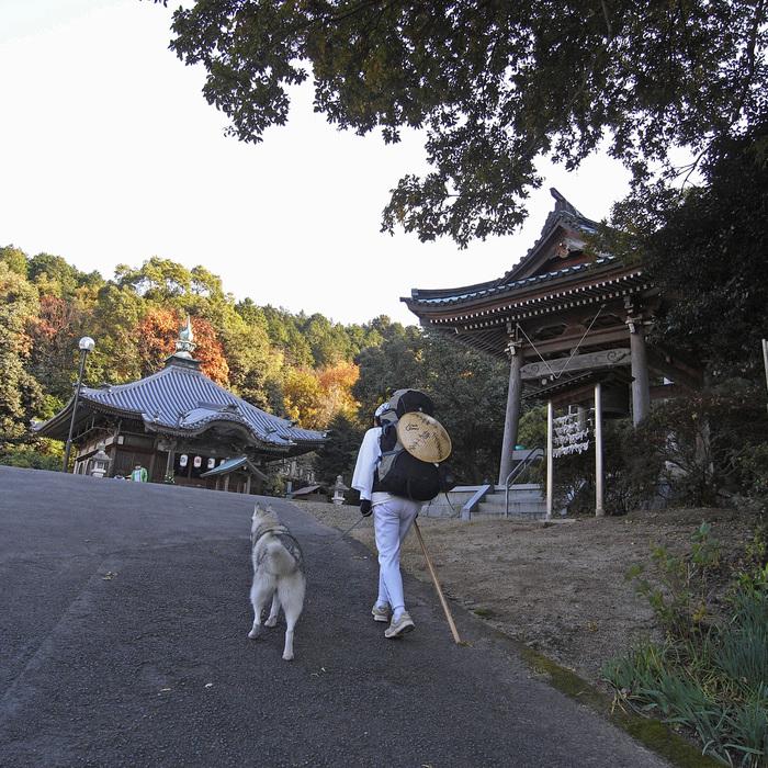 Memory of the second pilgrimage with husky HANA II_c0049299_18514382.jpg