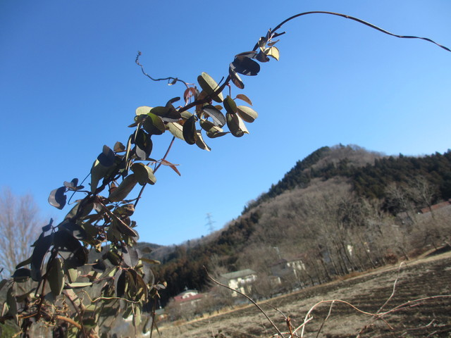 山と霜柱と仕事とワイン_c0212604_1757378.jpg
