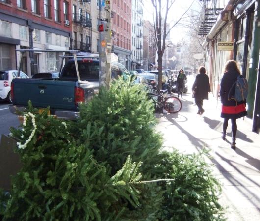 ご家庭のクリスマス・ツリーをリサイクルするNYの恒例行事、MulchFest_b0007805_19072.jpg