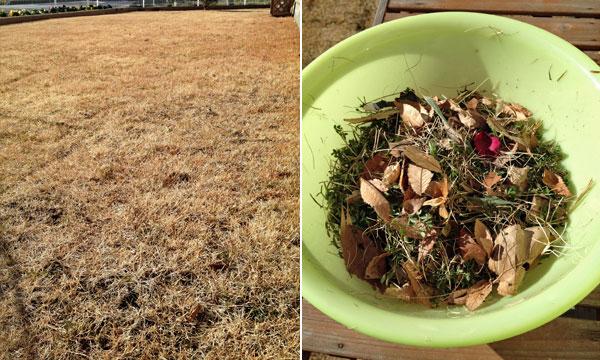 朝から冬枯れの芝生を整備_a0000006_2345677.jpg