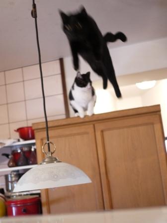 空飛ぶももんが猫 てぃぁらみるきぃ編。_a0143140_2351568.jpg