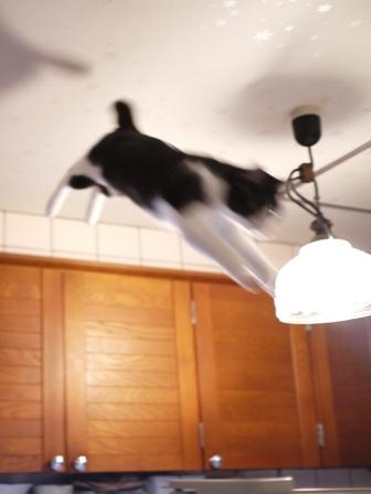 空飛ぶももんが猫 てぃぁらみるきぃ編。_a0143140_2391884.jpg