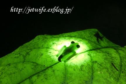 コスタリカへ(1) Rainforestを歩く_a0254243_223129.jpg