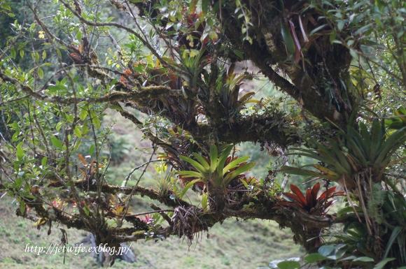 コスタリカへ(1) Rainforestを歩く_a0254243_2452773.jpg
