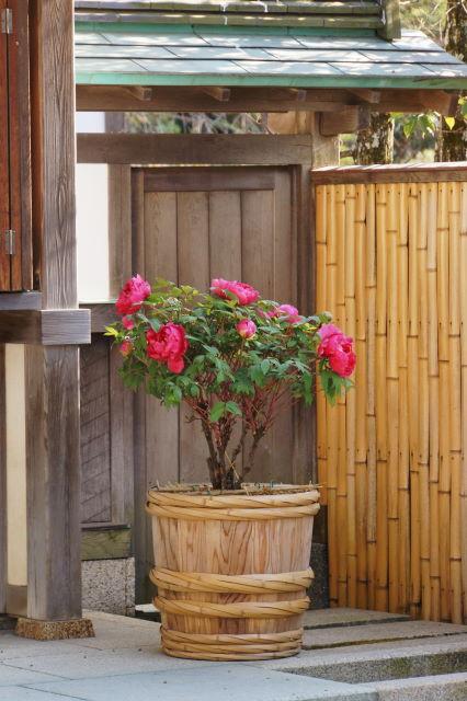 新春の鶴岡八幡宮_a0257652_2319785.jpg