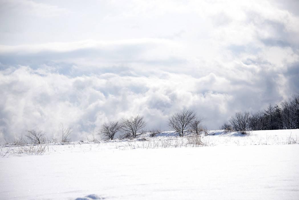 寒い日々です_e0271864_16333251.jpg