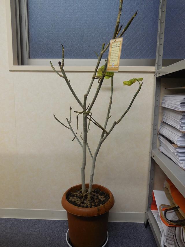 観葉植物_a0079474_16345197.jpg