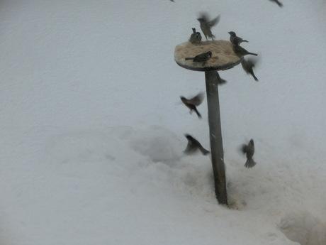 降ったる雪かな・雀食堂繁盛_a0203003_9103762.jpg