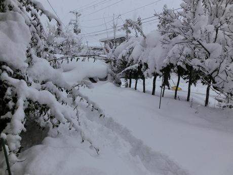 降ったる雪かな・雀食堂繁盛_a0203003_910755.jpg