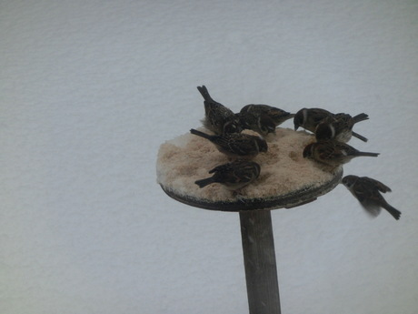 降ったる雪かな・雀食堂繁盛_a0203003_9114062.jpg