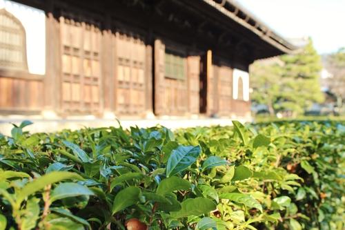 こんな京都もいいね!_b0220318_21344032.jpg