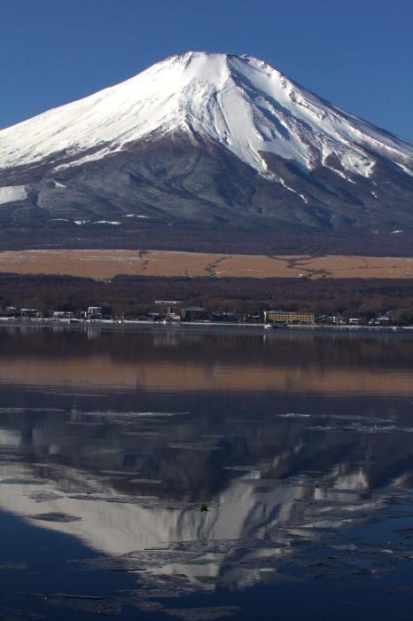 2014.1.12 今週末の鳥見は全滅・丹沢湖、山中湖・カワアイサ_c0269342_17560710.jpg