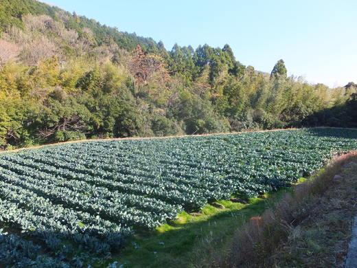 さぁ!収穫・収穫!_d0251679_0294889.jpg