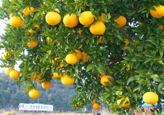 季節を求めて~JR名松線_f0266284_20414847.jpg