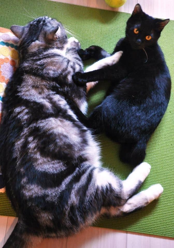 【猫】仲良く…ねぇ_f0141609_18265753.jpg