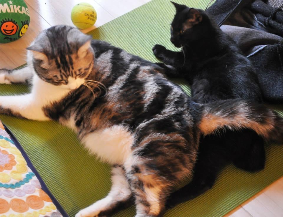 【猫】仲良く…ねぇ_f0141609_1827188.jpg