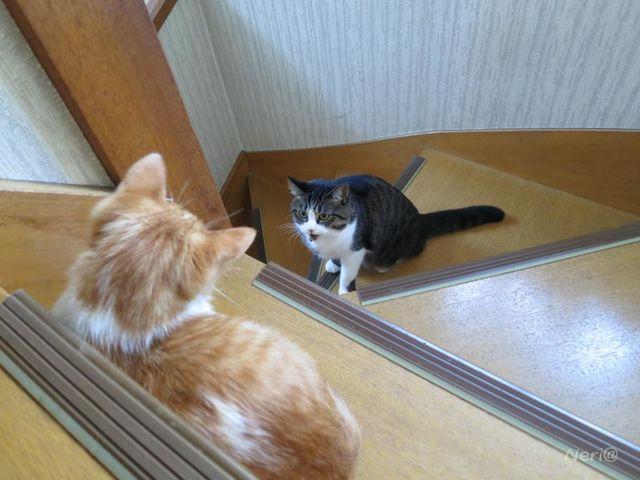 【猫】仲良く…ねぇ_f0141609_18274079.jpg