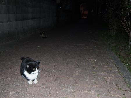 あのときの猫ちゃんたち_f0249710_23261219.jpg