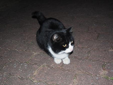 あのときの猫ちゃんたち_f0249710_23273318.jpg
