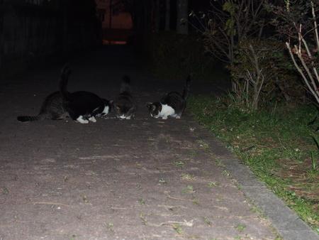 あのときの猫ちゃんたち_f0249710_23281050.jpg