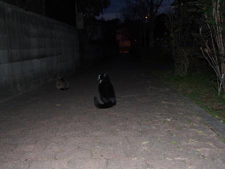 あのときの猫ちゃんたち_f0249710_23283842.jpg