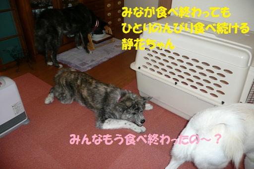 f0121712_1333528.jpg