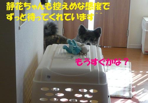 f0121712_1381482.jpg