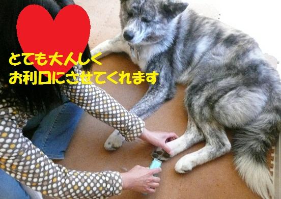 f0121712_15233213.jpg