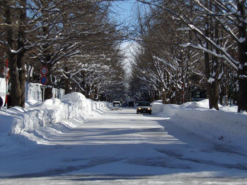 降り続いた雪が上がりまぶしい札幌_c0025115_18441138.jpg