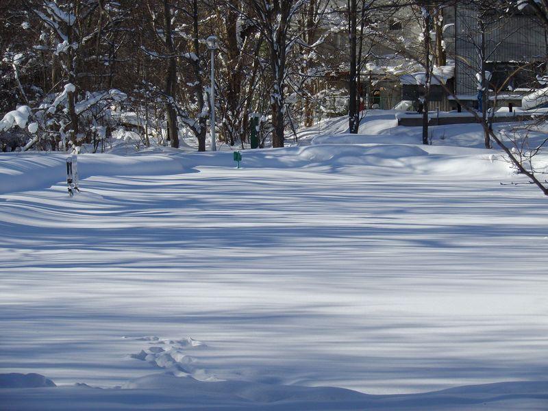 降り続いた雪が上がりまぶしい札幌_c0025115_1844561.jpg