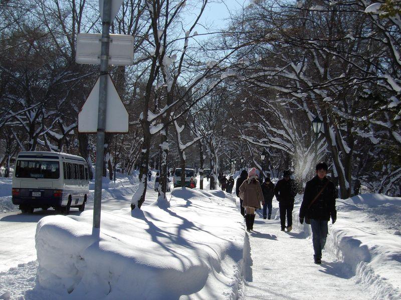 降り続いた雪が上がりまぶしい札幌_c0025115_1844753.jpg