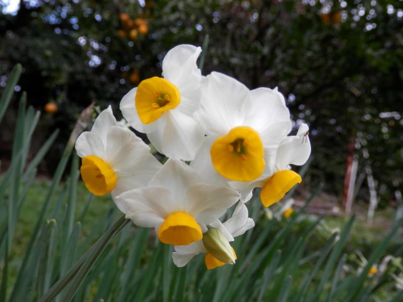 1月の「ガーデンふぁーむ」は、_a0125419_14175520.jpg