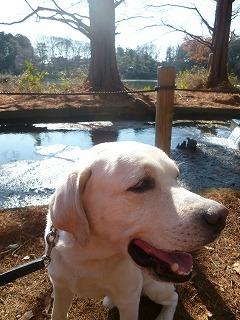 with  dog   真冬の石神井公園♪_a0165160_06220865.jpg