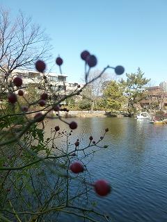 with  dog   真冬の石神井公園♪_a0165160_06225195.jpg