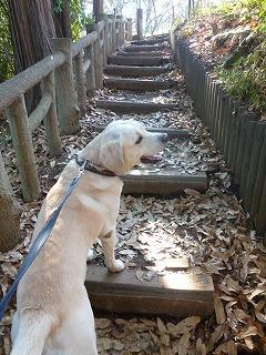 with  dog   真冬の石神井公園♪_a0165160_06251905.jpg