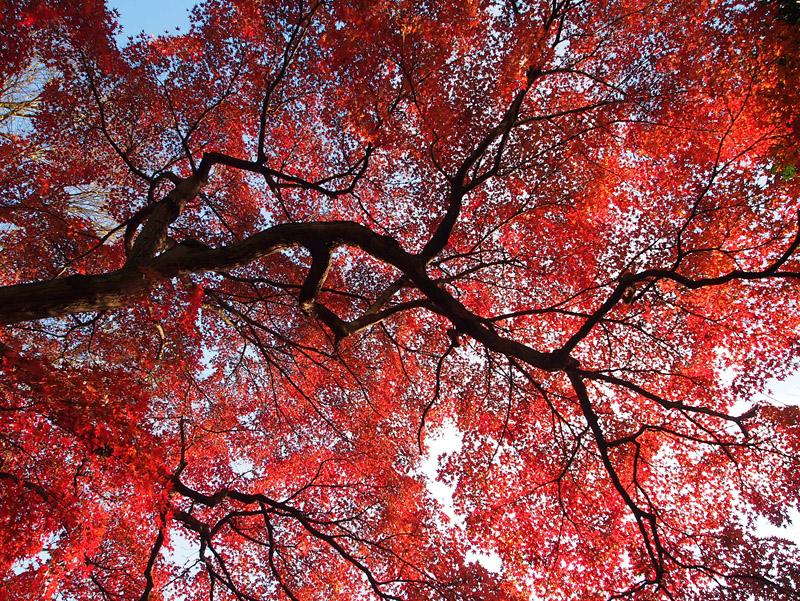 椿山荘の紅葉_b0067789_22471043.jpg