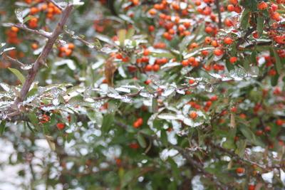 雪が降っています_e0179508_10373335.jpg