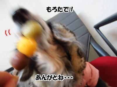 d0020869_13511064.jpg