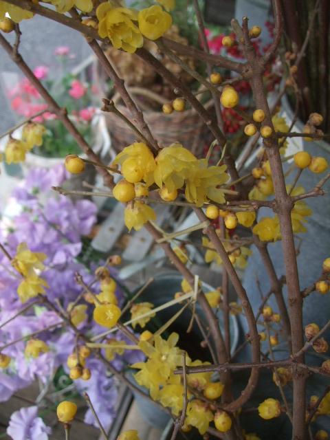 オークリーフ(春の花木に忘れな草)_f0049672_16584991.jpg