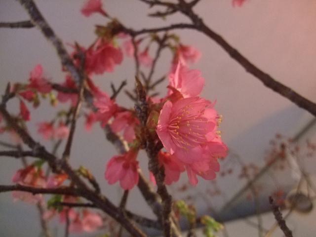 オークリーフ(春の花木に忘れな草)_f0049672_1751974.jpg