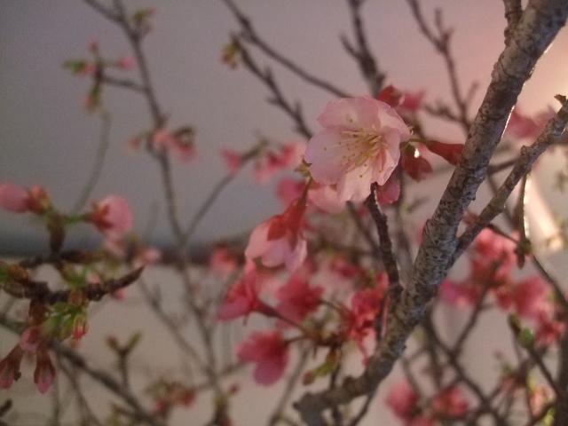 オークリーフ(春の花木に忘れな草)_f0049672_1752891.jpg