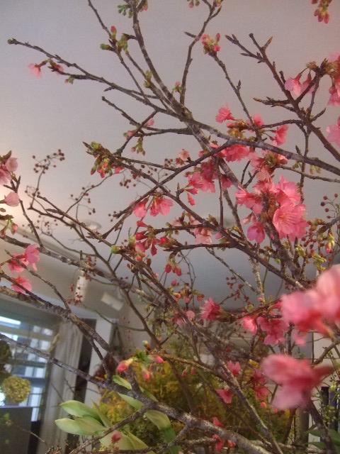 オークリーフ(春の花木に忘れな草)_f0049672_1764445.jpg