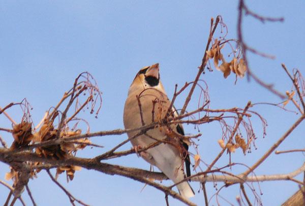 野鳥・2_d0162994_911796.jpg