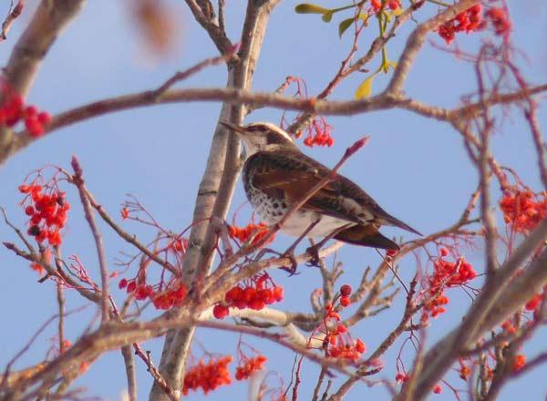 野鳥・2_d0162994_924419.jpg