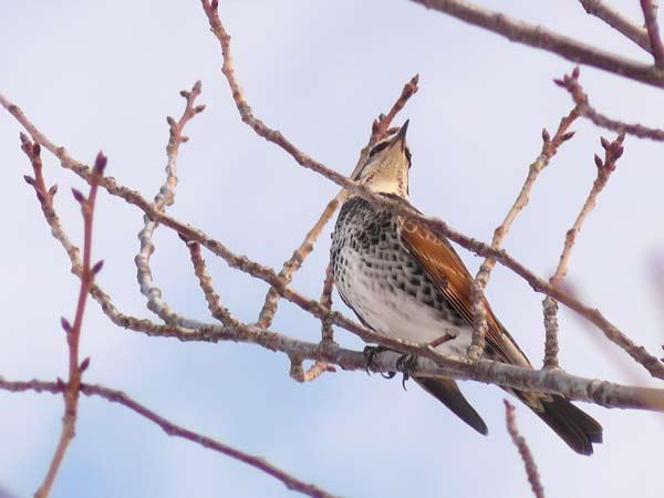 野鳥・2_d0162994_945029.jpg